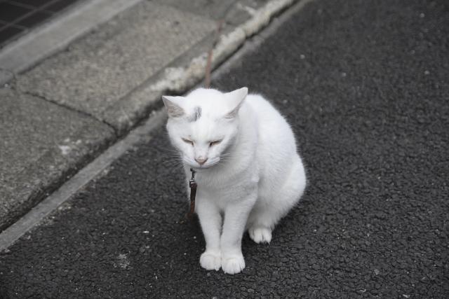 上野のネコ